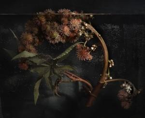 ricino 2010 serie plantas sumergidas